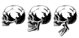 Graphic black and white human skull projection set Stock Image
