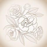 Graphic camellia set Stock Photos