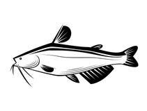 Graphic catfish, vector Royalty Free Stock Photos