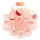 Graphic collection of pumpkins Royalty Free Stock Image