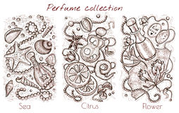 Graphic collection with sea, citrus and flower fragrances on white Royalty Free Stock Image