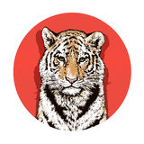 Graphic color drawing of a Bengal tiger. Wildlife. Big cat Stock Images