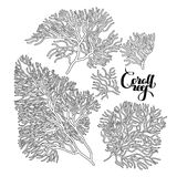 Graphic coral collection royalty free illustration