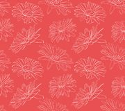 Flowers daisies in graphics vector illustration