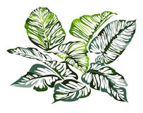 Graphic design green leaf on white background. Graphic design green leaf in abstract styles on white background Royalty Free Stock Photography