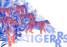 Graphic design with tigers standing, walking and roaring among the exotic leaves and trees stock illustration