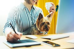 Graphic designer working at office with digital stylus on background monitor computer, smile hipster manager using pen with dog, f. Emale hands graw on portable royalty free stock photo