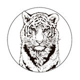 Graphic drawing of a Bengal tiger. Wildlife. Big cat.  Stock Photography