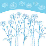 Graphic drawing of daisy flower. Background vector Royalty Free Stock Photos