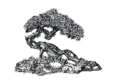 Deciduous bonsai.The natural form, the eastern mystery. Graphic drawing, an illustration of an exotic plant in the style of a bonsai, a black and white symbol Royalty Free Stock Image