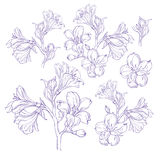 Graphic drawing of orchid flower. Vector illustration Royalty Free Stock Image