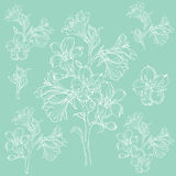 Graphic drawing of orchid flower. Vector illustration Stock Photo