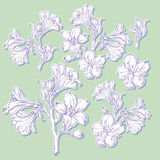 Graphic drawing of orchid flower. Vector illustration Royalty Free Stock Photos
