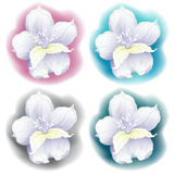 Graphic drawing of orchid flower. Vector illustration Stock Photography