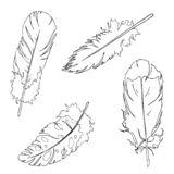 Graphic feathers set. Hand drawn vector sketch. vector illustration
