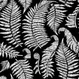 Graphic fern leaves. Graphic collection of fern branches. Vector seamless pattern. Coloring book page design Stock Photos