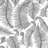 Graphic fern leaves. Graphic collection of fern branches. Vector seamless pattern. Coloring book page design Royalty Free Stock Image