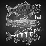 Graphic fish collection Stock Photo