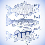 Graphic fish collection Royalty Free Stock Image