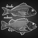 Graphic fish collection Stock Image