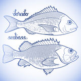Graphic fish collection Stock Photos
