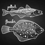 Graphic fish collection Royalty Free Stock Photos