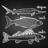 Graphic fish collection Stock Photography