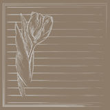 Graphic flower, sketch of tulip on beige background. Vector floral illustration in vintage style. Royalty Free Stock Photography