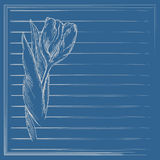 Graphic flower, sketch of tulip on blue background. Vector. Royalty Free Stock Photography