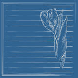 Graphic flower, sketch of tulip on blue background. Vector floral illustration. Royalty Free Stock Photo