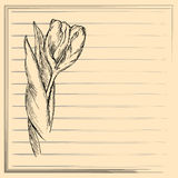 Graphic flower, sketch of tulip on creamy background. Vector floral illustration. Stock Photo
