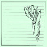 Graphic flower, sketch of tulip on green background. Vector floral illustration. Stock Images