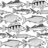 Graphic freshwater fish pattern Stock Image