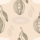 Graphic hand drawn seamless pattern with lemon. S Stock Image