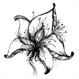 Graphic hand drawn vector flower. Stock Image