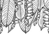 Graphic heliconia design. Graphic heliconia leaves and flowers. Vector exotic design. Seamless border. Coloring book page for adults and kids Royalty Free Stock Images
