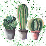 Graphic herbal beautiful wonderful floral herbal gorgeous cute spring colorful three cactus in pots watercolor Stock Photos