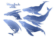 Graphic humpback whales. Collection of graphic humpback whales  on white background.  Giant sea and ocean creatures in blue colors Royalty Free Stock Photo