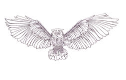 Graphic illustration of flying owl. Black and white style. Hand Royalty Free Stock Images
