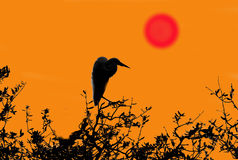 Graphic Illustration-Heron and Red Sun Royalty Free Stock Image