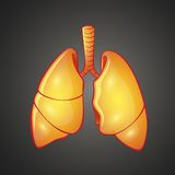 Graphic illustration of human Lungs Royalty Free Stock Images