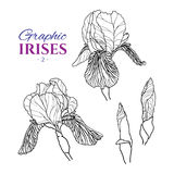 Graphic illustration of irises different angles. Graphic illustration of irises from different angles, set part 2. Hand drawn flowers and buds in line art style Stock Photo