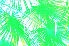Free Graphic Illustration Of Green Palm Leaves Branches In Blue On White Backgrund Royalty Free Stock Image - 108922906