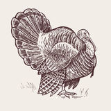 Graphic illustration - poultry turkey. Royalty Free Stock Photography