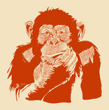 The graphic image of a monkey.Vector eps 10 Royalty Free Stock Photo