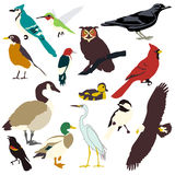 Graphic images of birds. Graphic representations of popular North American birds Royalty Free Stock Photos