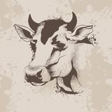 Graphic ink drawing, sketch the head of a cow Royalty Free Stock Image