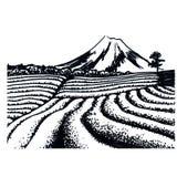 Tea fields of Japan. Graphic landscape of Japanese tea fields Stock Photography