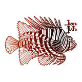 Graphic lion fish Royalty Free Stock Image