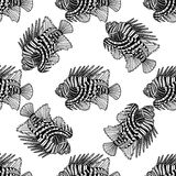 Graphic lion fish Stock Images